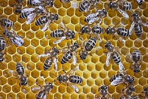 Le sida est allergique aux piqûres d'abeilles dans Actualité abeille